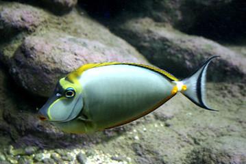 Ryba tropikalna