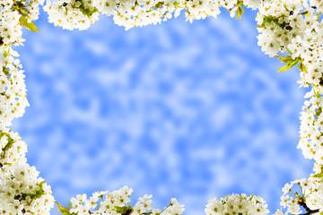 Blütenrahmen, Grußkarte