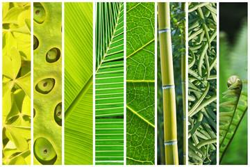 Dégradé végétal de vert