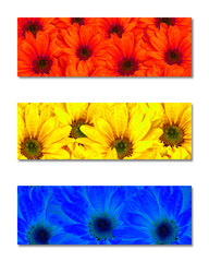 Primary Colors Abstract Art Flowers