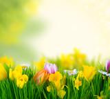 Fototapety natur dream tulip
