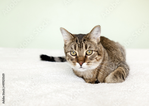 Small Tabby Cat in Bedroom