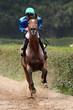 Warmup vor dem Pferderennen