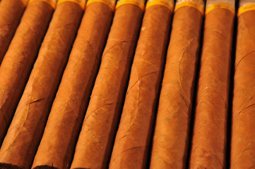 Row of luxourious Cuban cigars