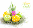Easter eggs and green sprouts are in a nest on a white backgroun