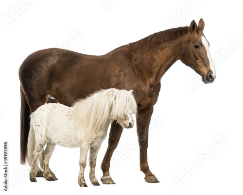 Horse and Shetland standing next to each other