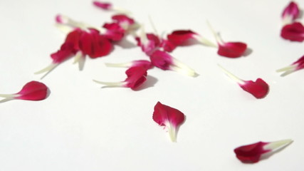 Red Falling Flower Petals