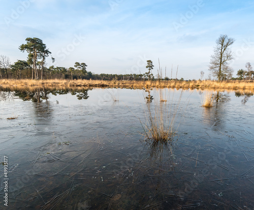 Marsh area in winter
