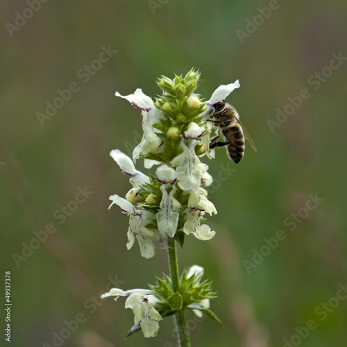 Bee pollinate a flower