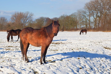 old horse on winter pasture