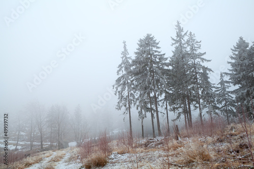 Foto op Canvas Bos in mist snow and fog in Harz mountains