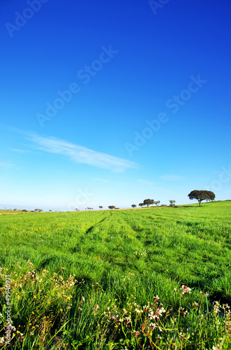 Trees on green field, alentejo, Portugal