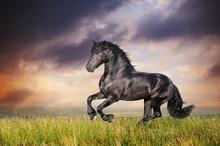 Noir galop cheval frison