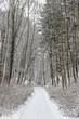 Winter Waldweg