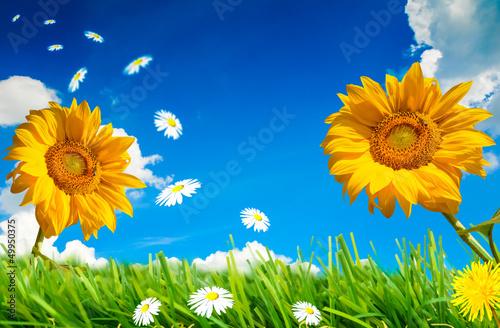 Fototapeten,sommer,blumenwiese,sonnenblume,sonnenblume