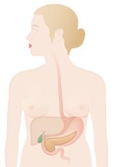 Frau mit Organen (Leber, Magen, Galle, Pankreas)