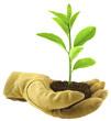 concept reboisement, environnement, écologie