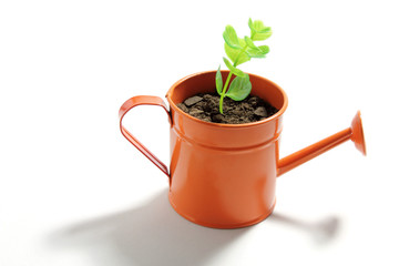 Young Plant in Watering Can