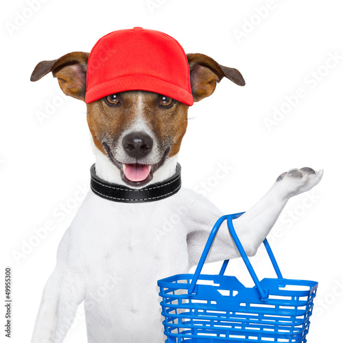 shopping dog