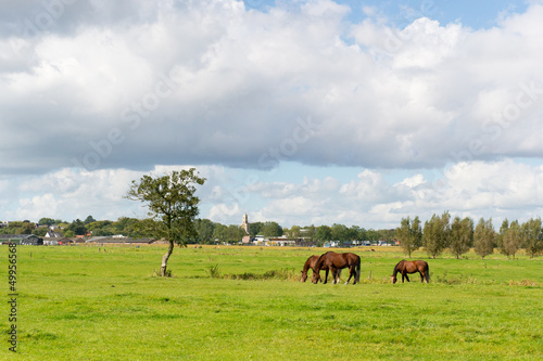 Dutch landscape with horses