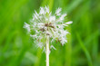 hawkbit in seed