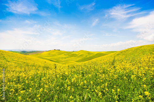 Field of flowers with blue sky and clouds, Tuscany, Italy