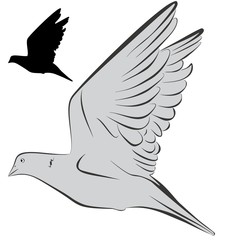 A an vector illustration of dove