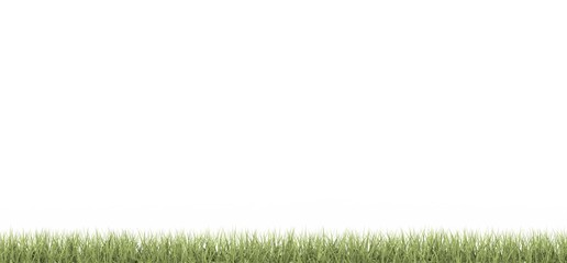 Cesped - grass - Pasto