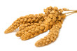 Millet ,bird food on white background