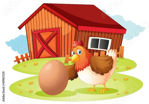 Foto op Canvas Boerderij A hen with egg