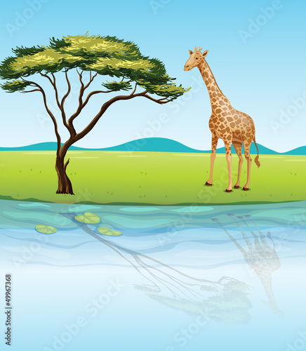 A giraffe beside the river