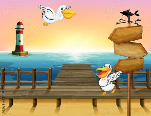 Two birds near a wooden arrow board