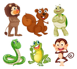 Six different kinds of animals in the jungle