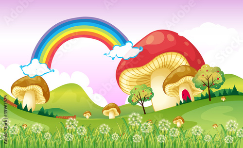 Mushrooms near the rainbow