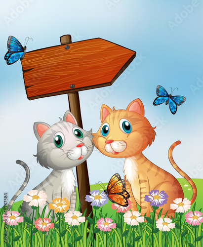 Poster Katten Two cats in front of an empty wooden arrow board
