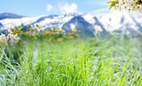 Frühlingswiese vor Alpenpanorama