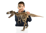 Little child examining dinosaur skeleton isolated