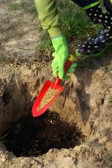Planting - fertilization of plants