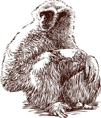sitting gibbon