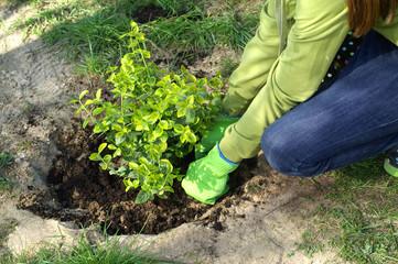 Planting - soil tamping