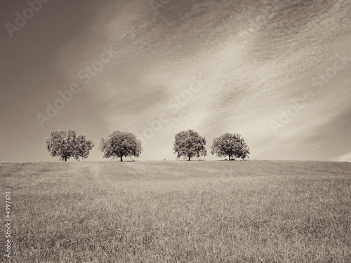 canvas print picture trees with blue sky and clouds 33, sepia