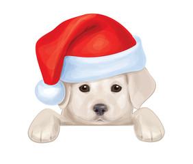 Vector of cute puppy in Santa's hat hiding by blank.