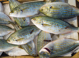 Sarpa salpa fish at the market