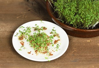 Garden cress, homemade cultivation