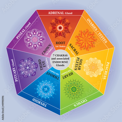 Illustration 7 Couleurs Chakras Mandalas + Glandes Endocrines