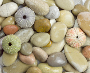 pebble and sea urchin