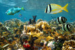 Fishes in a colorful coral reef