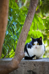 beautiful black and white cat sitting on a wall