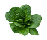 Spinach Isolated