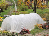 Spunbond hotbed for wintering roses in the autumn garden